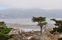Northern California (3)