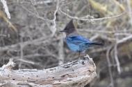 Northern California Birds