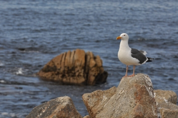Big Sur-Monterey, CA